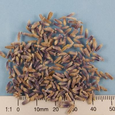 BIO-Lavendelblüten